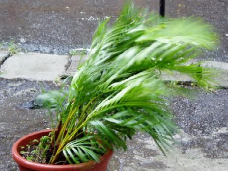暴風雨です!!
